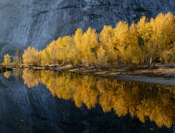 Cottonwood Reflections