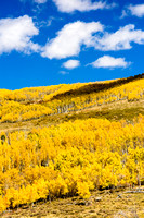 Fall Aspens - Dixie National Forest