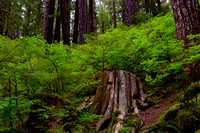 Sol Duc Forest